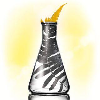 fernblock-ampolla-small